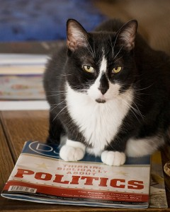 cat and politics by kretyen